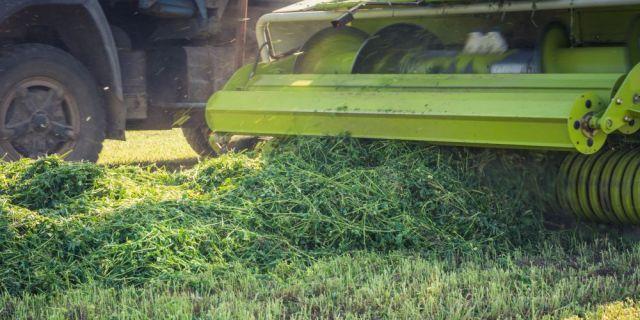 Изборът на инокулант играе важна роля за качеството на тревния сенаж