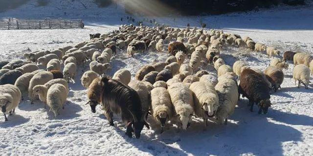 Как да запазим добрите резултати във фермата в студеното време?