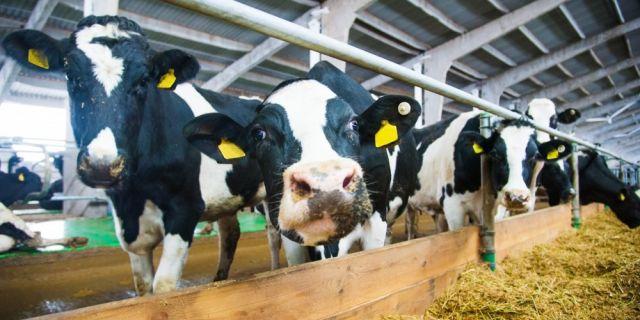 Бизнес форум за професионалното животновъдство събира фермери от цялата страна
