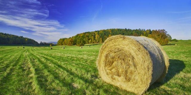 Фермерите закупуват мощният инокулант ProFerm HC за постигане на качествен тревен сенаж