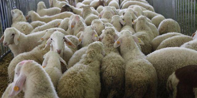 HL-TopMix раздаде награди на победителите в Седмият Националния събор на овцевъдите
