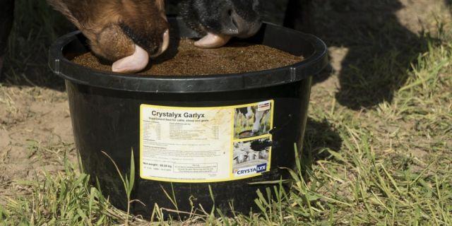 Употребата на  CRYSTALYX® Garlyx* стимулира естествената защита на животните срещу мухи и комари
