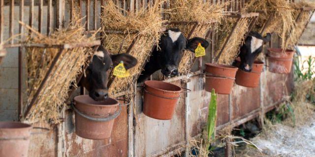 """Ферма """"Катриг-5 Никола Янков"""" -  отличният пример за развитие на успешно животновъдство"""