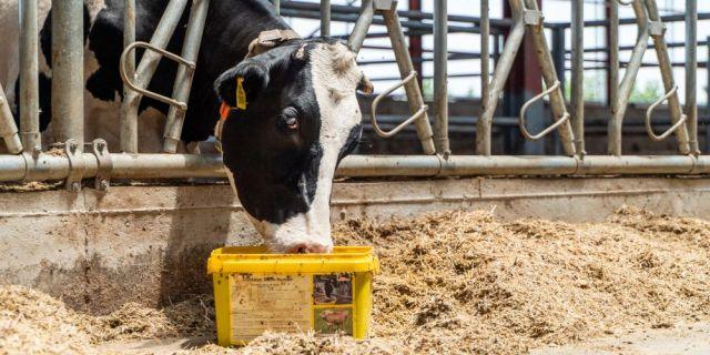 Фермери обмениха опит и знания в Академия за фермери 2019 (ВИДЕО и СНИМКИ)