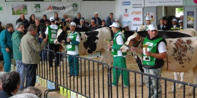 Национално изложение на черношареното говедо в Сливен
