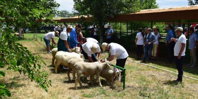 HL-TopMix отчете засилен интерес към методите за постигане на високопродуктивно овцевъдство по време на СЛИВЕН ЕКСПО