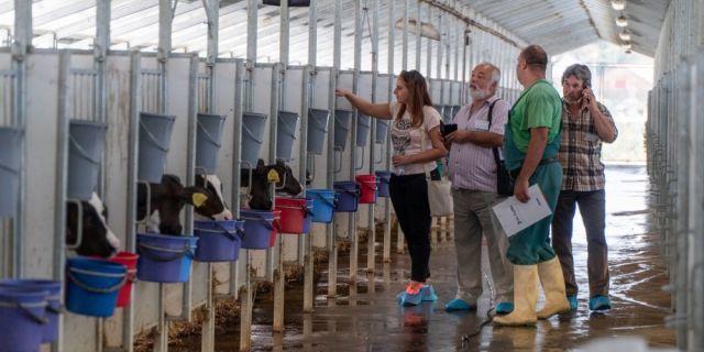 Моята ферма: Елви ООД прилага иновативен метод на отглеждане на своите животни