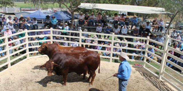 Аукционите за животни – Принципи и възможности