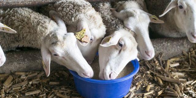 Как да получим повече мляко през зимата?