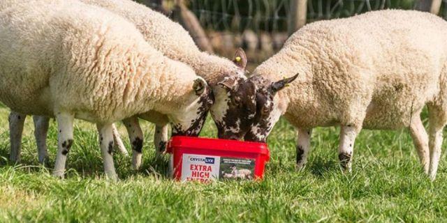 Концепцията Crystalyx® за овце - гарантираната ефективност