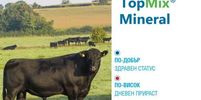 Ролята на минералните добавки при угояването на месодайните телета